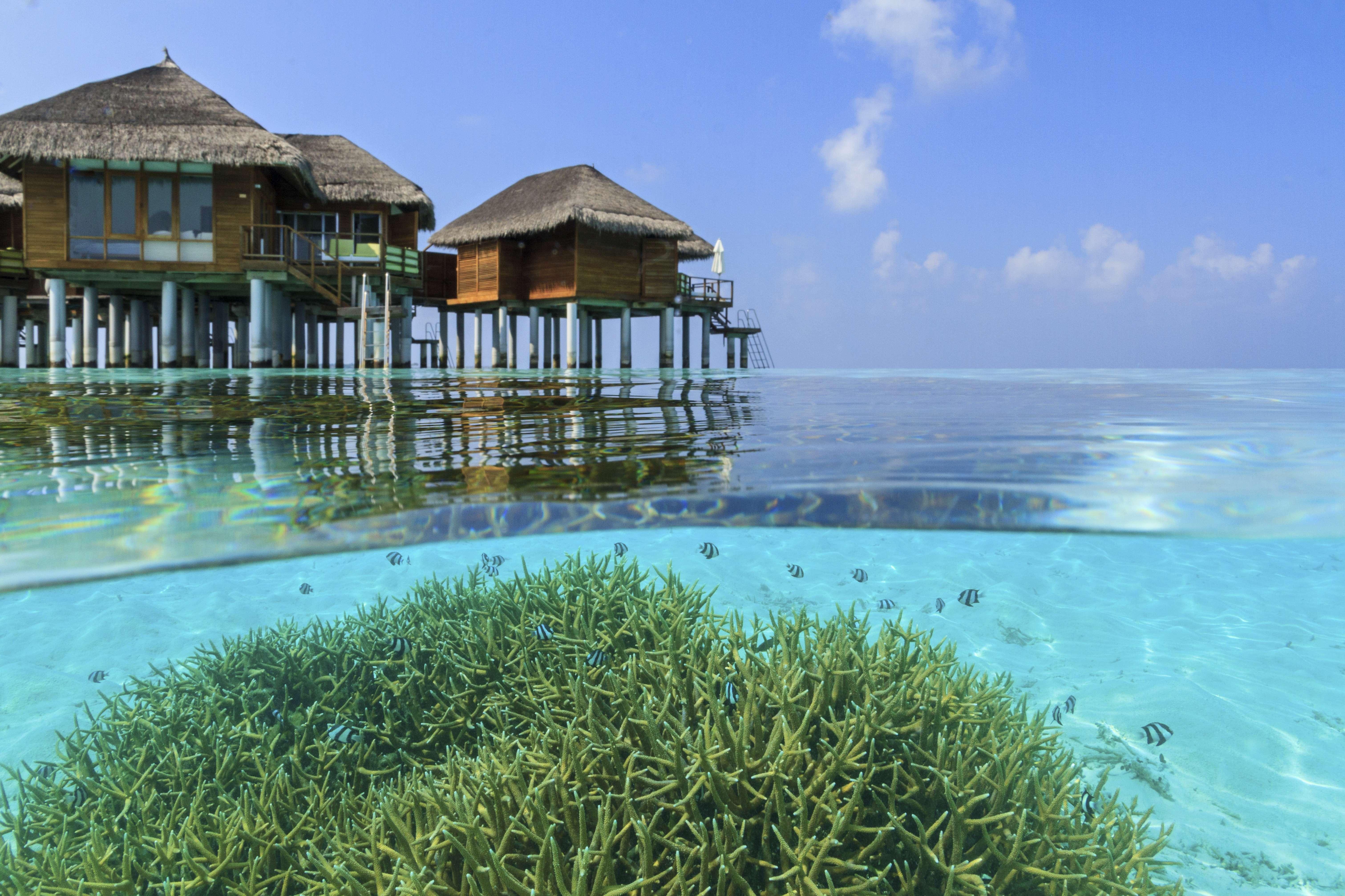 Maafushivaru Island Resort, South Ari Atoll, The Maldives